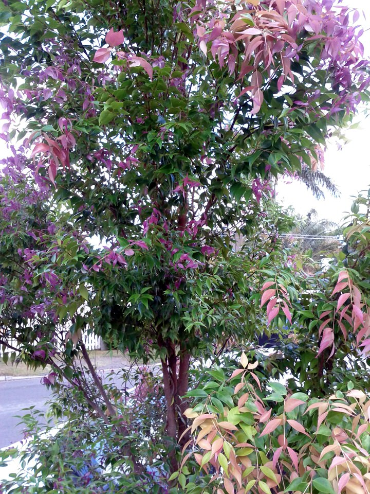 Tree with iridescent leaves